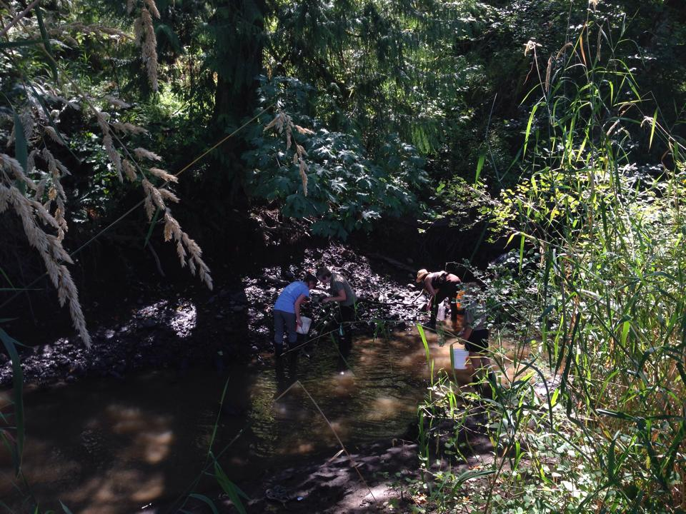 These volunteers found a large freshwater mussel bed, along with crayfish, lampreys, sculpins and snails. Photo credit: Laurie Fait